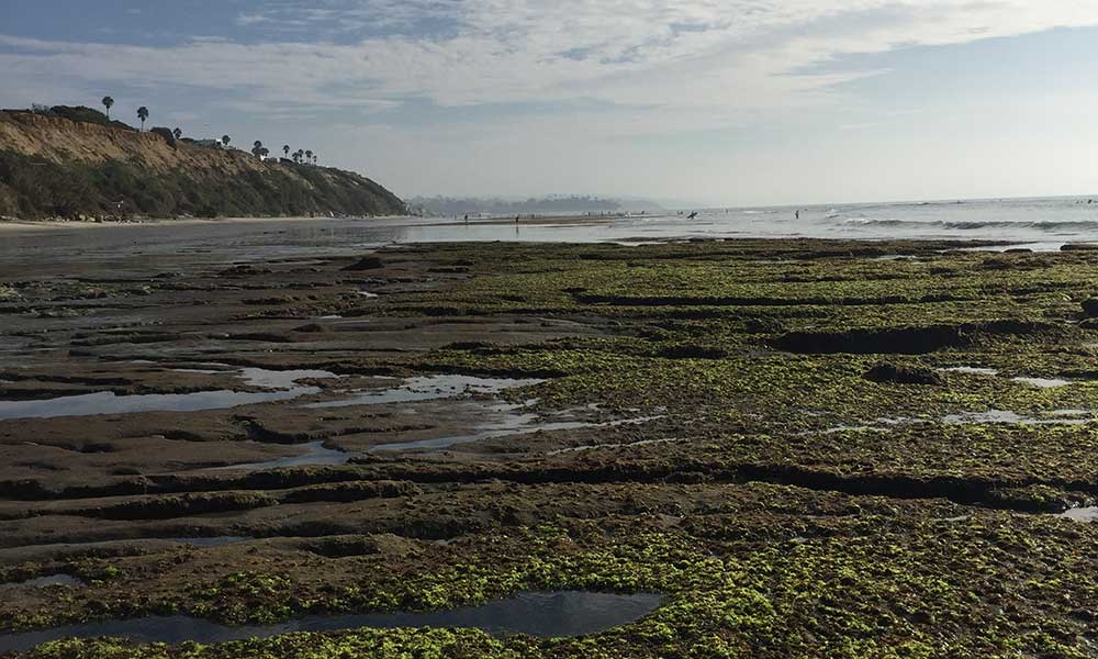 Cardiff, California at Low Tide